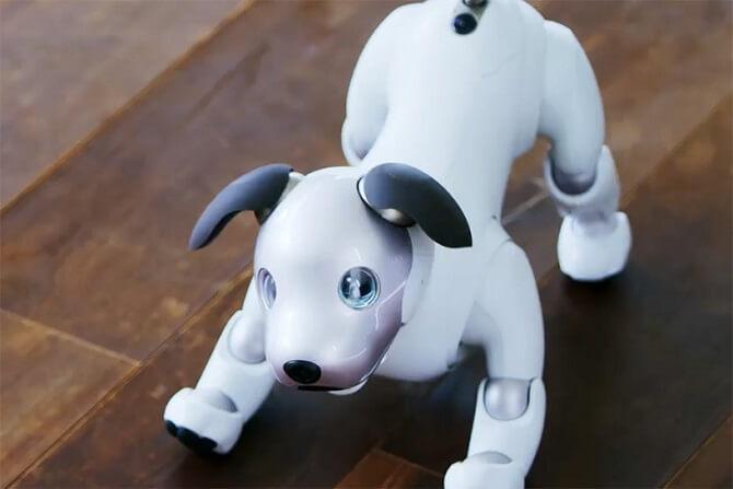 Robotický pes Aibo