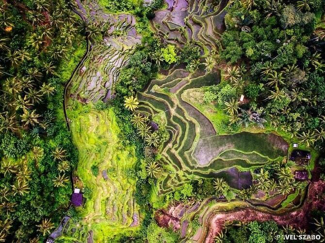 rýžová políčka v oblasti Ubud (Bali, Indonésie) z pohledu dronu