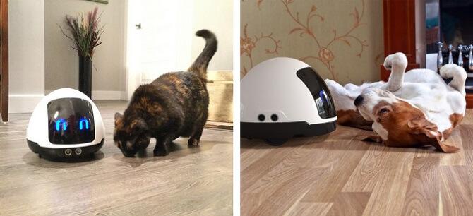 Robot Mia s kočkou a se psem
