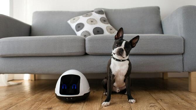 Robot Mia a pes