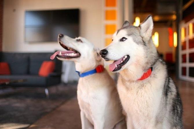 WÜF je vhodný pro velkého i malého psa.