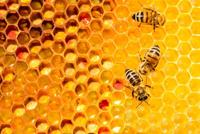 Včelí stráž – boj za budoucnost včel