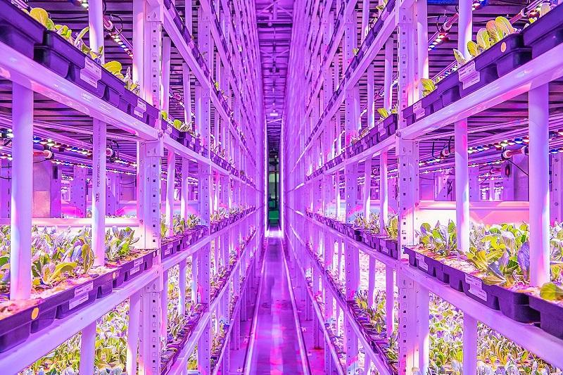 Vertikální farma v Moskvě
