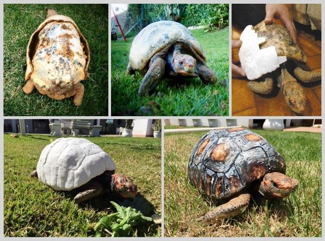 Cesta od zdevastovaného krunýře k novému želvímu ukrytu.