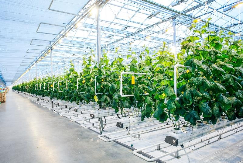 Vysoce energetické skleníky v zemědělství